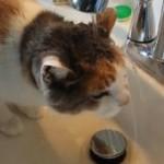 ヘンな水の飲み方をする猫ちゃんが可愛い☆