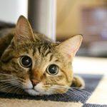 猫好きさん必見!SNSで人気の猫さんをご紹介します♪