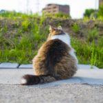 世界最古のネコ科と言われるマヌルネコ!もふもふ感が可愛い♪会える動物園も紹介