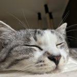 飼っている猫と少しでも長く一緒に暮らすために!ハイテクアイテムも利用しましょう!