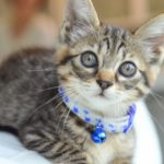 愛する猫さんには長生きして欲しい!!キャットフードの正しい知識と選び方!安心・安全なキャットフード5選!
