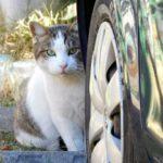 「猫バンバン」ってご存知ですか??寒い時期には必要なこと!猫も人も安心して過ごせる社会のために実践しましょう!