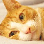今、ツイッターで「#猫の写真へたくそ選手権」というハッシュタグがトレンド入りしています!猫大好きの私が気に入った投稿を紹介しまーす♪